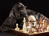 image of indoor games  - dog with glasses playing chess - JPG