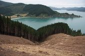 Forrest Logging, Picton New Zealand