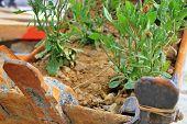 Occupiers grow flowers in an excavator bucket