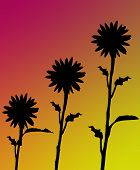 Background - Sunflower Silhouette