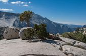 stock photo of errat  - Trees and two glacial erratic boulders at Olmsted Point in Yosemite National Park - JPG