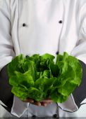 stock photo of butter-lettuce  - Chef Wearing Black and White Uniform Holding Fresh Butter Lettuce - JPG