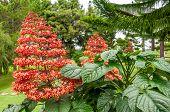 Sumatra Flowers