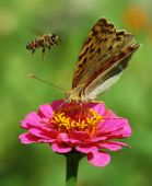 Butterfly On Flower and bee