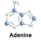 Adenine