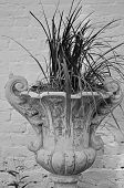 Urn of ornamental grass