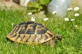 Turtle Crawling On A Grass