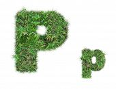 pic of letter p  - letter P on green grass isolated on over white background - JPG