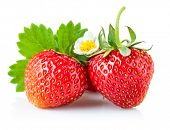 Fresh strawberry with green leaf and flower. Isolated on white background
