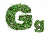 Letter G On Green Grass Isolated