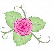 colored illustration with rose leaves