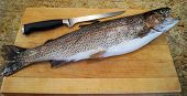 Fresh Rainbow Trout