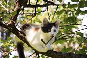 Cute Three Colored Kitten Gnawing On Tree Branch