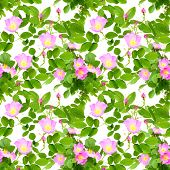 image of dog-rose  - Abstract seamless pattern with pink flowers buds and green leafs of dog - JPG