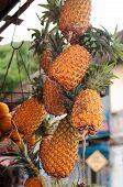 Ananas bunch hanging at market