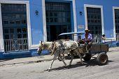 Horse-drawn Carriage In Trinidad, Cuba