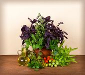 Beautiful still life with basil celery dill marjoram parsley lettuce and tomatoes cherry on wooden b