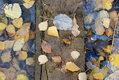 Board on frozen autumn leaves
