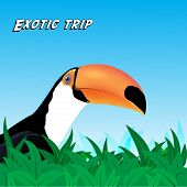 foto of toucan  - Vector Exotic trip card with a Toucan - JPG