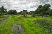 picture of house woods  - Green wet moor covered with grass and trees and a house in a tropical park - JPG