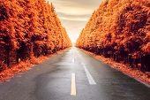 Autumnal Asphalt Road