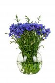 Bouquet of wildflowers - cornflowers in a glass vase isolated on white background studio shot