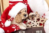 puppy christmas American Cocker Spaniel