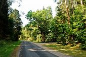 Asphalt Road In In The Forest Anyksciai District
