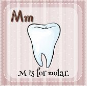 stock photo of molar  - Flashcard letter m is for molar - JPG