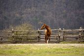 foto of beautiful horses  - Beautiful young horse standing alone in the corral - JPG