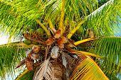 Coron de Filipinas y la isla de Malcapuya