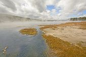 picture of early morning  - Early Morning Steam and Mist on a Tangled Creek in Yellowstone National Park in Wyoming - JPG