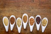 stock photo of sorghum  - seven healthy - JPG