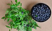 Постер, плакат: Wild Berries Of Bilberry