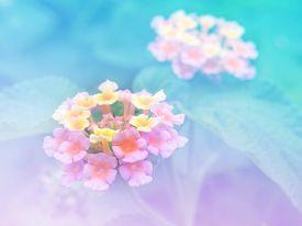 picture of lantana  - Abstract Blurry Lantana  - JPG