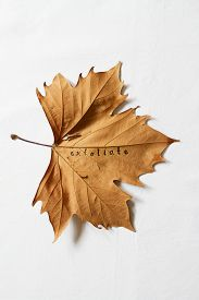picture of dead plant  - Exfoliate word printed on dead autumn leaf to convey the concept of dry skin - JPG