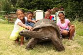 School kids with giant tortoise