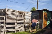 picture of outhouses  - lobster pot traps side of outhouse toilet storage building Big Corn Island Nicaragua Central America - JPG