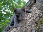 Bimbo Cat