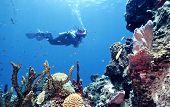 Pristine Reef