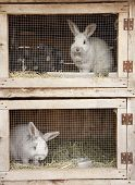 picture of rabbit hutch  - Breeding rabbits on a farm in small boxes - JPG