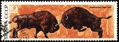 Two Bisons On Post Stamp