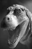 Close up of a model T Rex from the museum, focus on the eye, shallow DOF