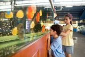 Young girl showing her little brother the different type of colorful fish in a big tank.