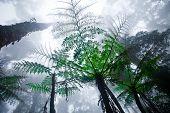 Misty mountain forest of Mount Kinabalu, Malaysia's highest mountain, North Borneo.