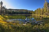 Temprano en la mañana clara de otoño. Enganches, talones y árboles secos en la costa del lago en la nación de Yosemite de montañas