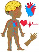 Vector Illustration Flat Cartoon Style. Silhouette Of A Boy With An Image Of The Brain, Heart And Ci poster
