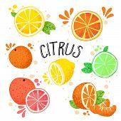 Hand Draw Vector Illustration Of Citrus Fruits. Fresh Ripe Citruses Isolated On White - Lemon, Lime, poster