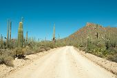 cactus, hills and dirt road