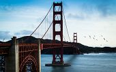 Wide Angle Shot Of Sea Gulls Flying Over The Golden Gate Bridge In San Francisco California poster